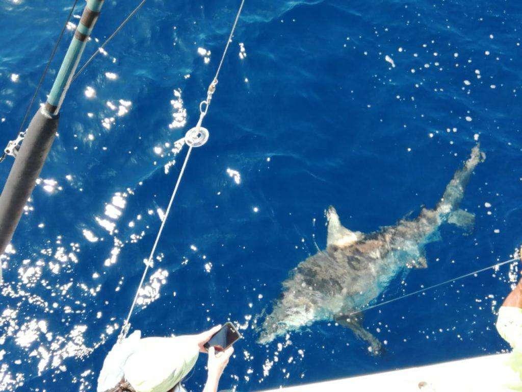 Outcast Tamarindo half day charter shark
