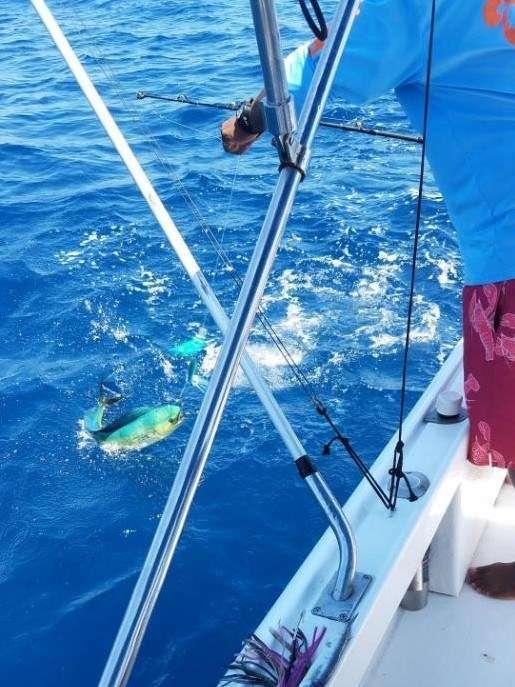 Rainbow Runner Tamarindo full day charter dorado