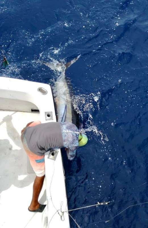 Outcast Tamarindo full day charter blue marlin