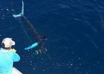 Talking Fish Tamarindo full day charter striped marlin