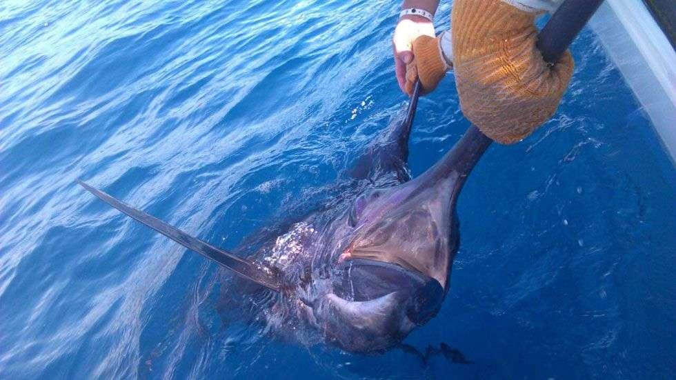 Outcast Tamarindo marlin
