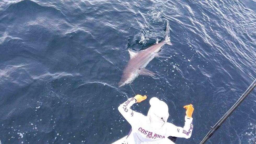Outcast Tamarindo shark