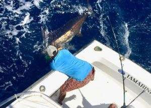 Talking Fish Tamarindo full day charter blue marlin