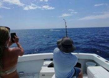 Salsa Tamarindo half day charter blue marlin
