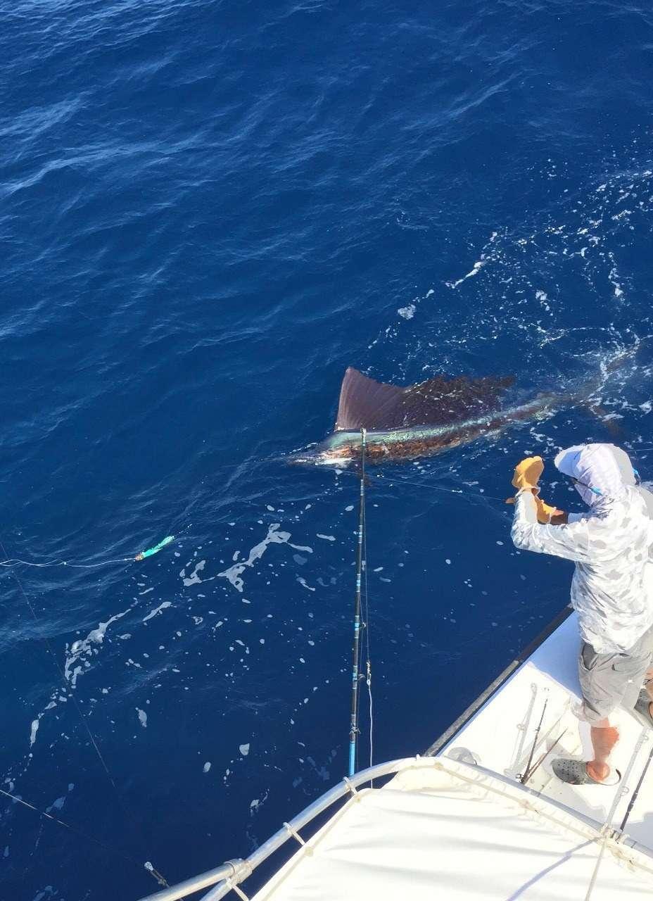 Talking Fish Tamarindo full day charter sailfish
