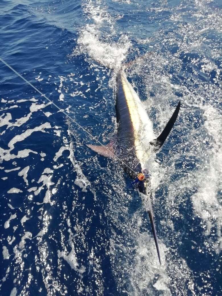 Salsa Tamarindo full day charter blue marlin