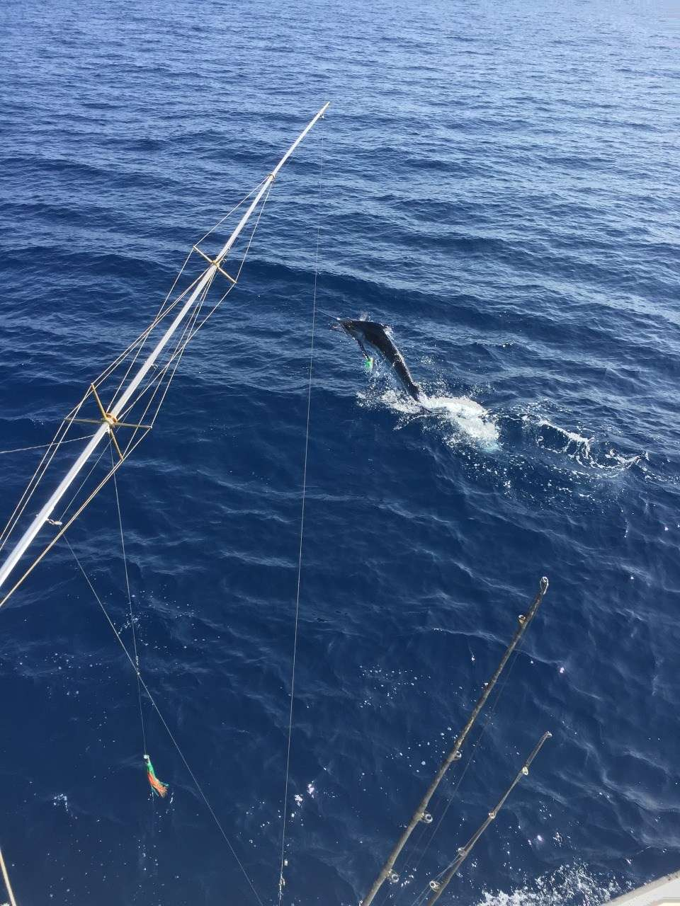 Talking Fish Tamarindo full day charter blue marlin